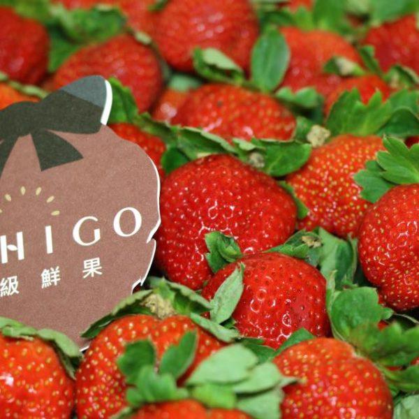 大湖草莓12