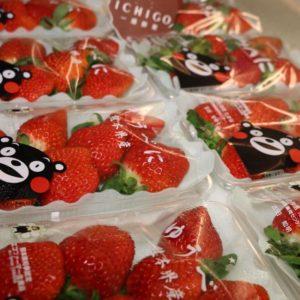 熊本草莓3