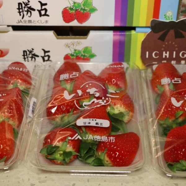 德島勝占草莓