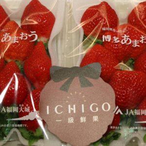 福岡草莓2